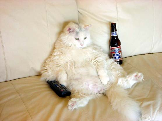 Drunk Cat Watching TV